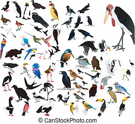 images of birds - collection of vector images of birds