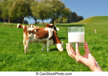 Glass of milk against herd of cows. Emmental region,...