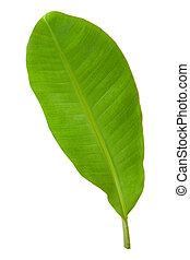 Fresh Green Banana Leaf