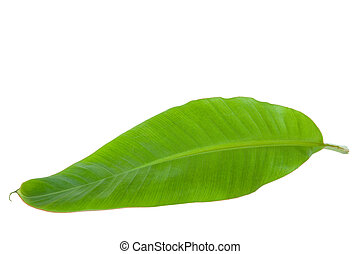 Fresh Green Banana Leaf Isolated with Clipping Path
