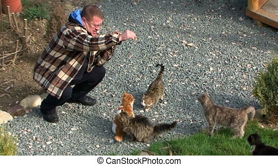 Man feeds his cats - Group of cute cats receive food from...