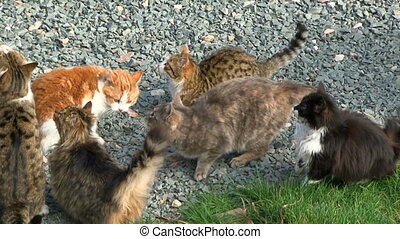 Flock of cats - Group of cute cats receive food from the...