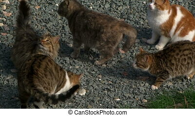 Group of domestic cats - Group of cute cats receive food...