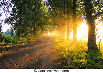 Sun Rays - Sun rays beaming out from the trees