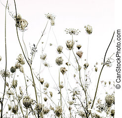 Summer meadow silhouettes art background with text space
