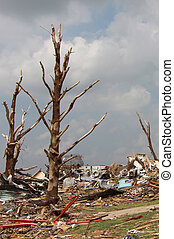Tornado Damaged Trees - A powerful EF5 tornadoe tore massive...
