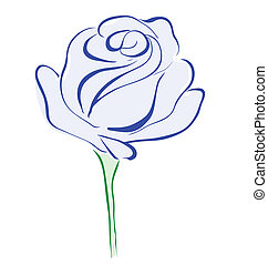 Blue rose flower isolated on white background