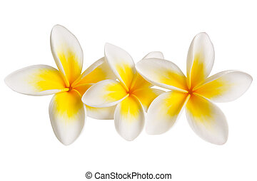 Plumeria (with Path) - Three plumeria or frangipani flowers,...