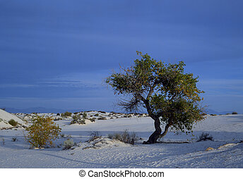 Lone tree in rippled sand dunes in White Sands National...