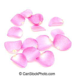rose petals border on white
