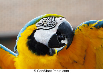 A portrait of a mccaw parrot with its brightly colored...