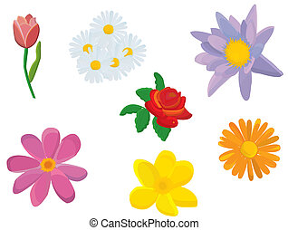 illustration with flowers isolated on white background