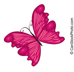 Vector Illustration of detailed Brightly coloured butterfly