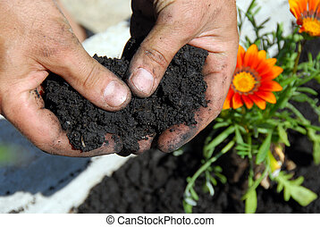 Black soil - black soil for planting flowers in man hands...