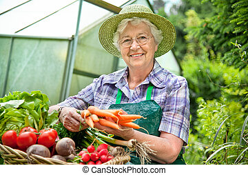 Harvest - Senior woman with a basket of harvested vegetables...