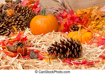 Autumn theme with pine cone - An Autumn holiday theme with...