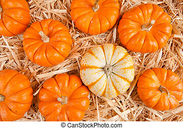 Pumpkins on hay - A group of pumpkins on a stack of hay