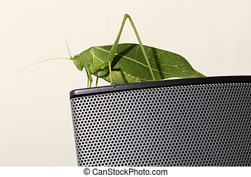 Green Leaf Katydid