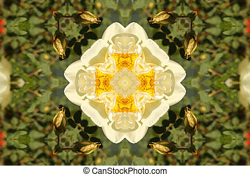 Abstract background with white roses