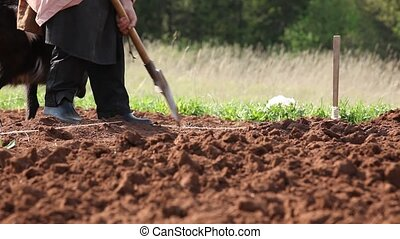 glina-3 - persons digs land by shovel