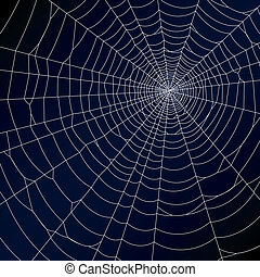 Spider web - Vector illustration of a spiders web