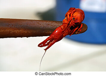 A boiled crawfish on a boat paddle.