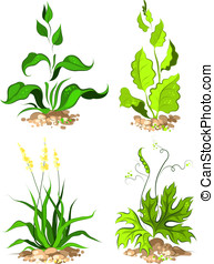 Set plants for design