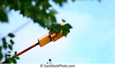 street lamp at sunset and tree branch under wind