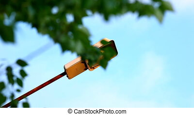 focus from street lamp to tree branch at sunset
