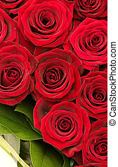 roses - bouquet of roses, red roses