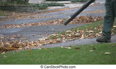 Leaf blowers. - Men with leaf blowers clean up autumn...