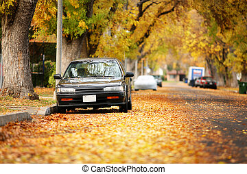 Autumn street covered with yellow leaves