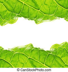 Fresh salad leaf detail isolated on white.