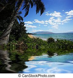 piękny, tropikalny, Plaża, Hawaje