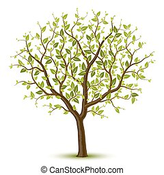 Tree with green leafage - Vector illustration of a tree with...