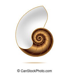 Nautilus shell - Detailed vector illustration of a nautilus...