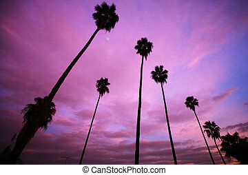 High palm trees over beautiful pink sunset sky