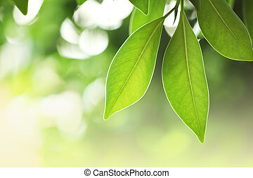 Fresh green leaves - Beautiful fresh green leaves macro...