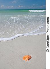 SeaShell on the Beach - A Sea Shell on the Beach