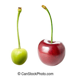 Unripe and ripe cherry - Unripe and ripe cherry isolated on...