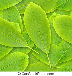 Nutwood leafs seamless background. - Nutwood leafs seamless...