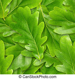 Oak leafs seamless background. - Oak leafs seamless...