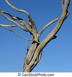 Dead Tree - An Old Dead Tree with Blue Sky