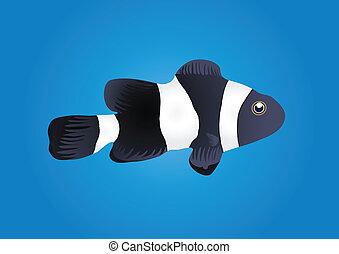clownfish - Vector illustration of clownfish isolated on...