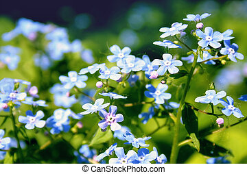 Small blue flowers on a summer day