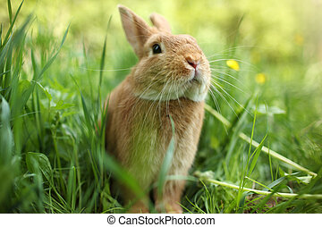 Rabbit in green grass - Cute rabbit in green grass Close-up,...