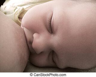 bebê, peito, alimentação