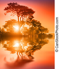 Beautiful trees at sunset - Fantasy scenic trees over lake...
