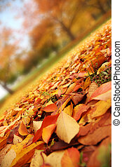 Autumn leaves - Beautiful red and yellow leaves covering...