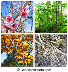 Four seasons collage - Four seasons. A pictures that shows...